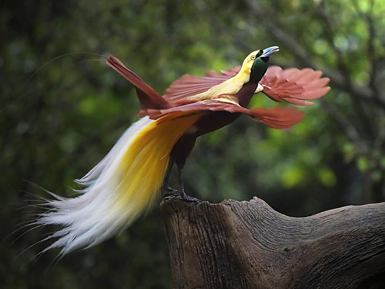 райские птицы красивые фото зараженного