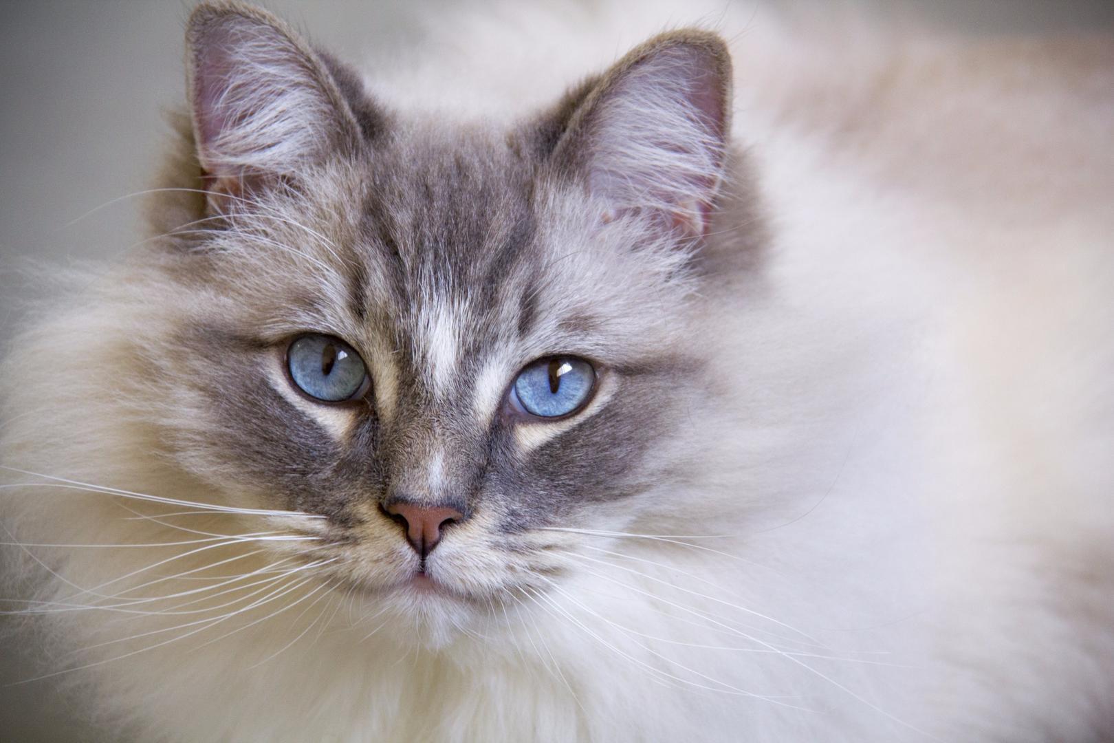 best geriatric cat food