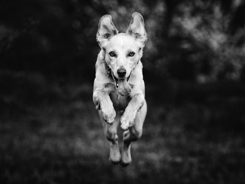 10 Top Tips for Photographing Running Dogs | Photocrowd