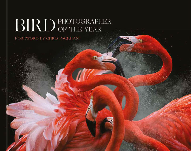 Bird Photographer of the year Collection 3