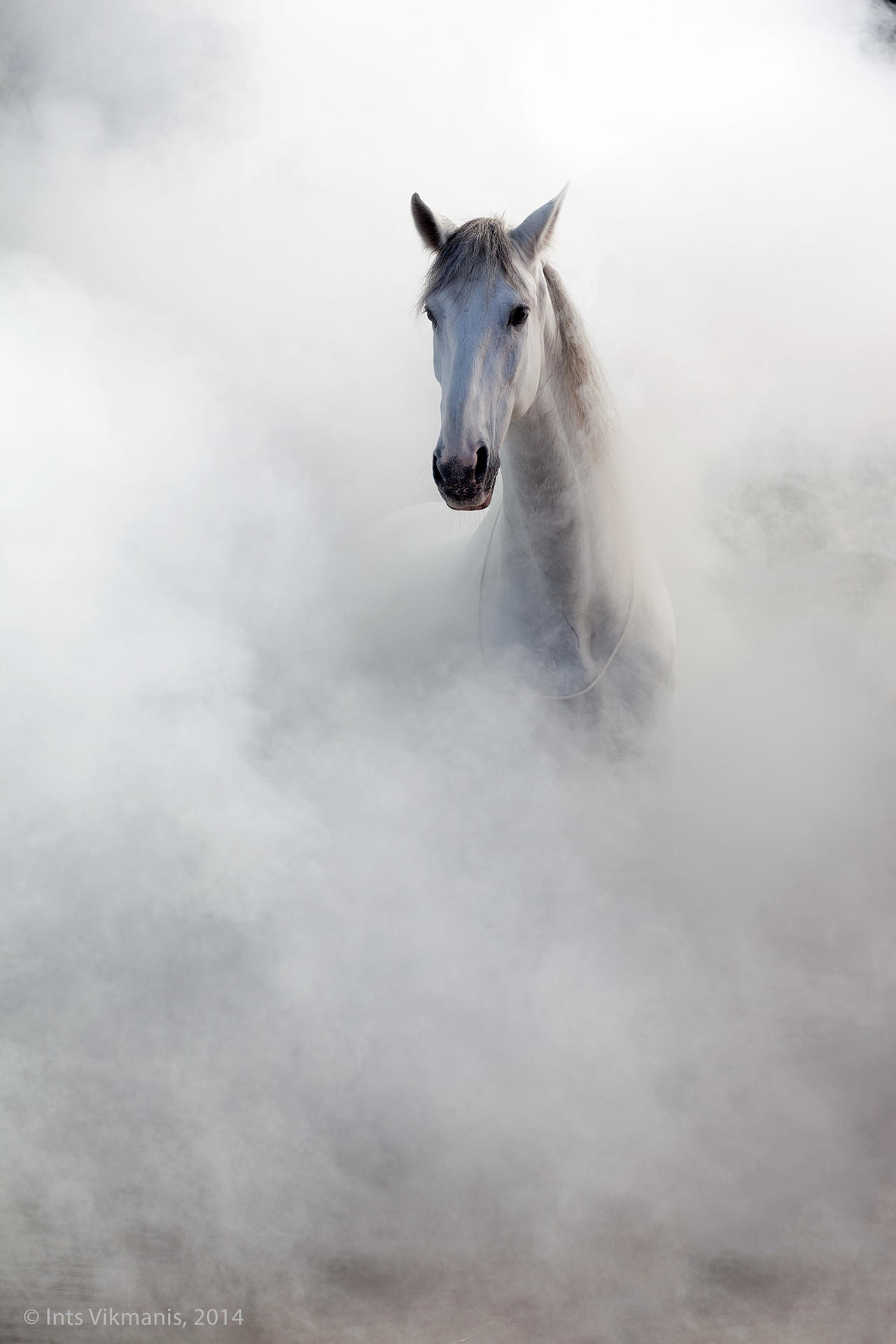 17 Of The Best Examples Of Horse Photography Photocrowd Photography Blog